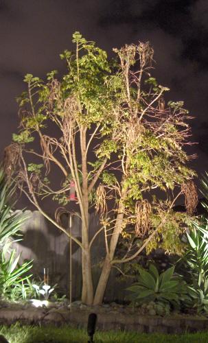 Tree Uplight